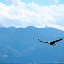 Blauer Adler-Welle